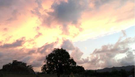 Haitian Love Tree Sunset